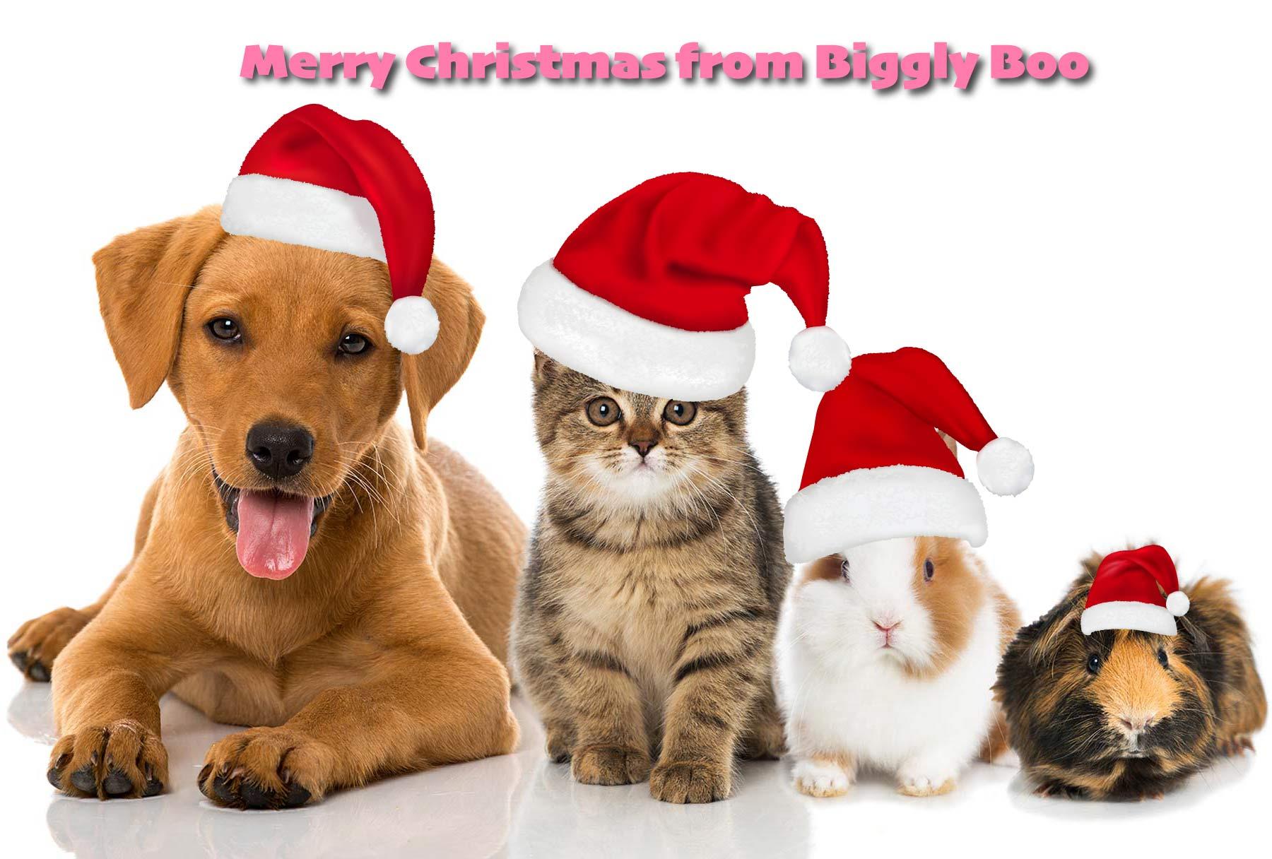 christmas-pet-sitter-leighton-buzzard