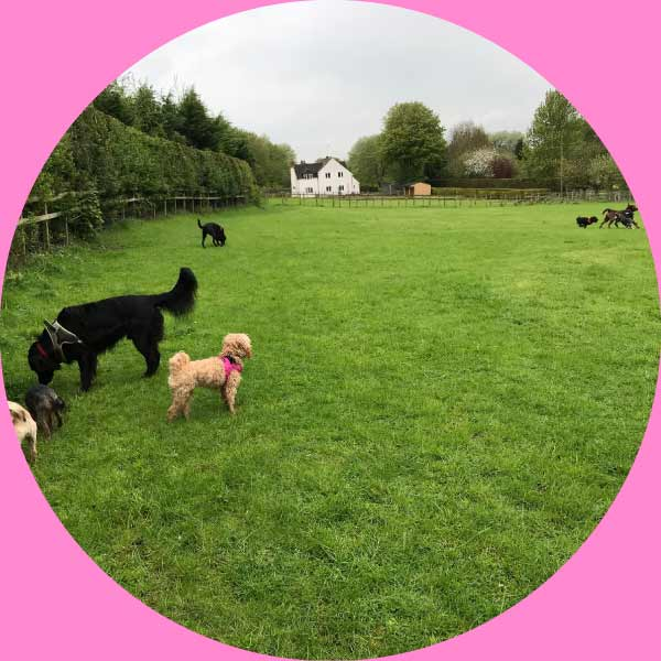 our-secure-private-field-for-your-dogs-wellbeing